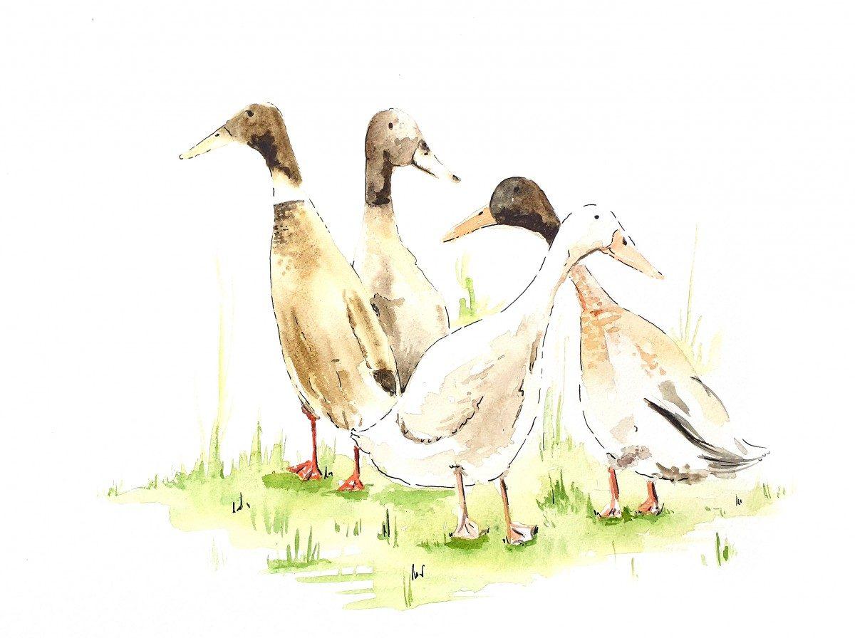 Les Canards du Moulin Haut